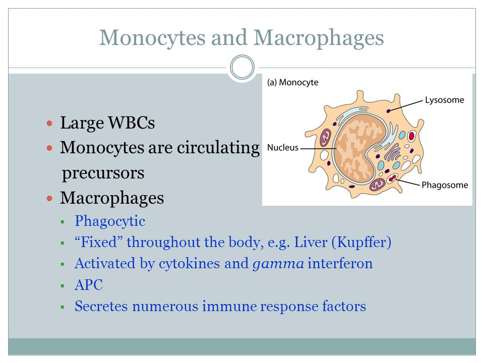 Monocytes and Macrophages