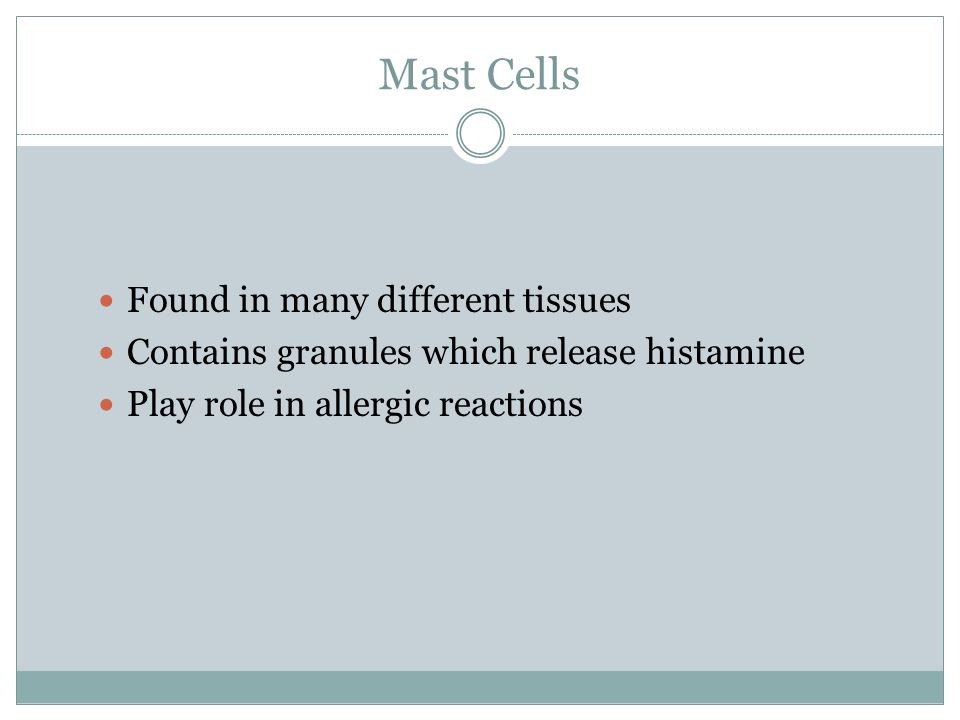 Mast Cells Found in many different tissues