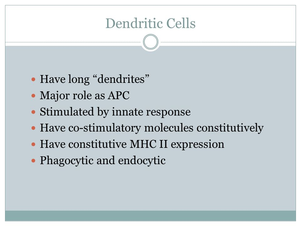 Dendritic Cells Have long dendrites Major role as APC