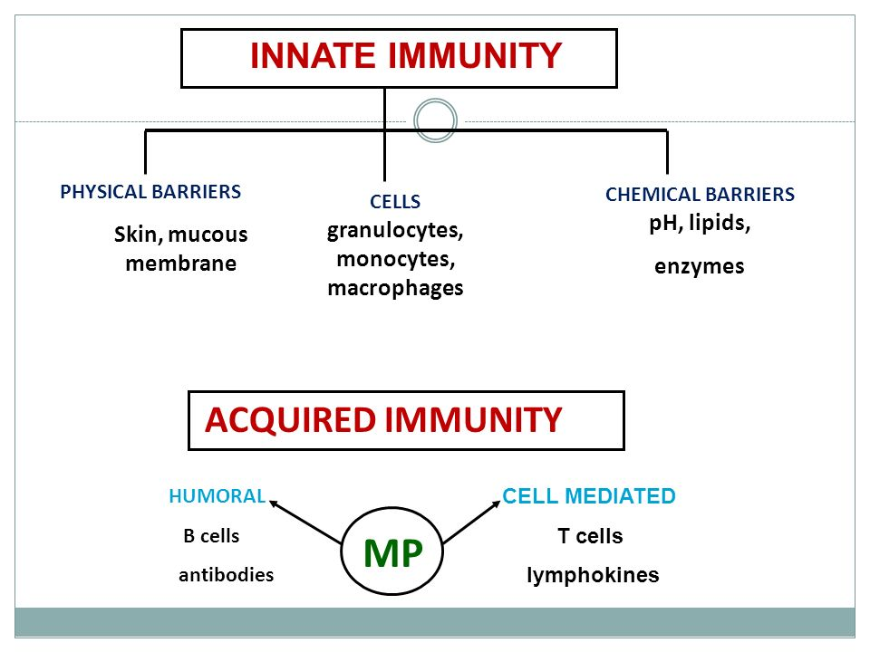 MP ACQUIRED IMMUNITY INNATE IMMUNITY Skin, mucous membrane enzymes