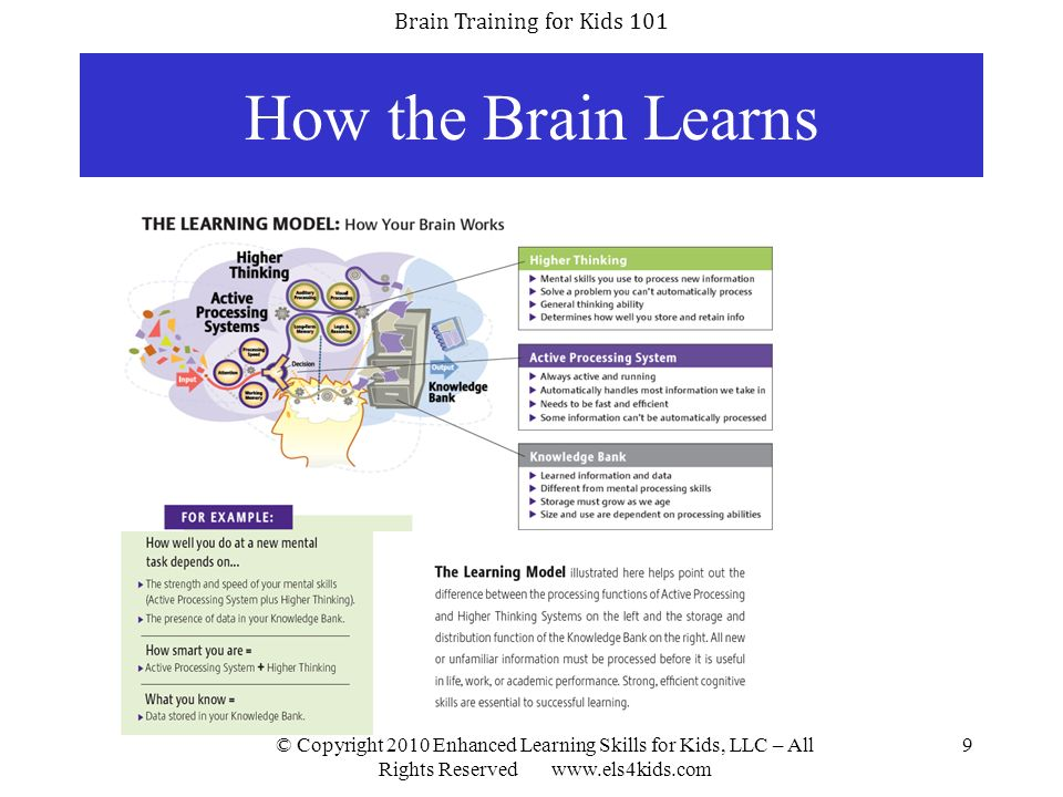 How the Brain Learns © Copyright 2010 Enhanced Learning Skills for Kids, LLC – All Rights Reserved www.els4kids.com.