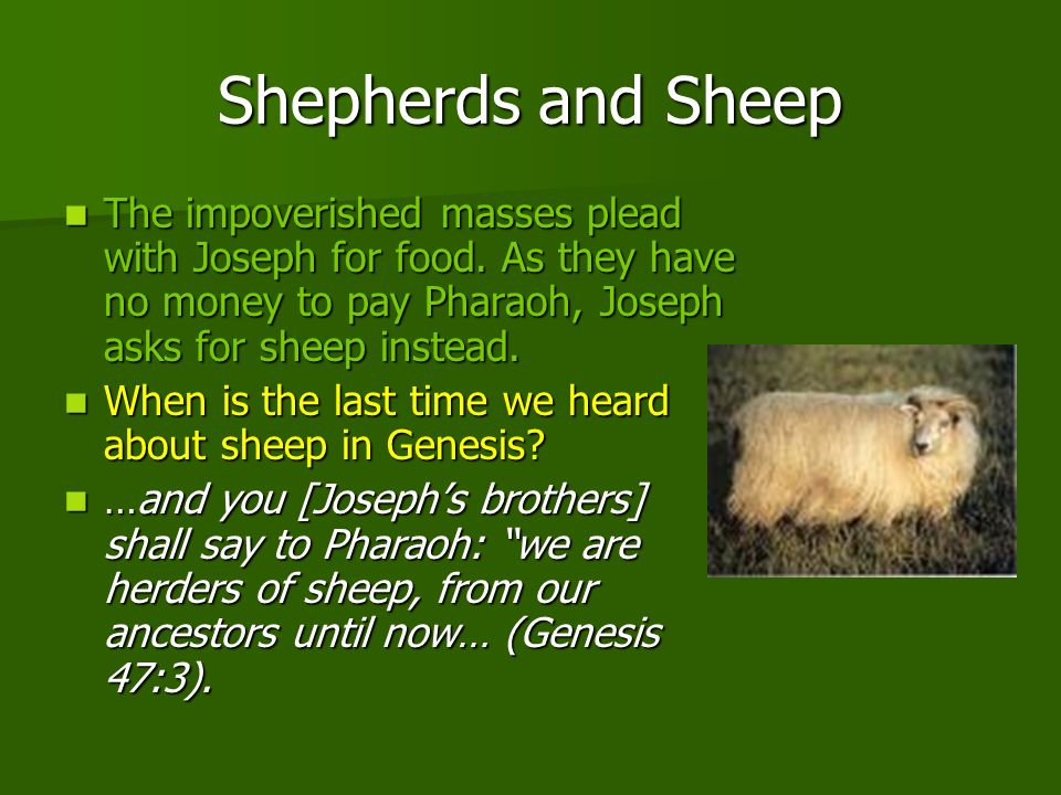 Shepherds and Sheep The impoverished masses plead with Joseph for food. As they have no money to pay Pharaoh, Joseph asks for sheep instead.