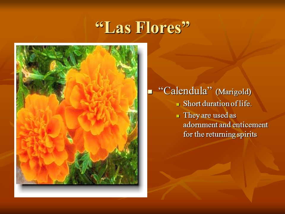 Las Flores Calendula (Marigold) Short duration of life.
