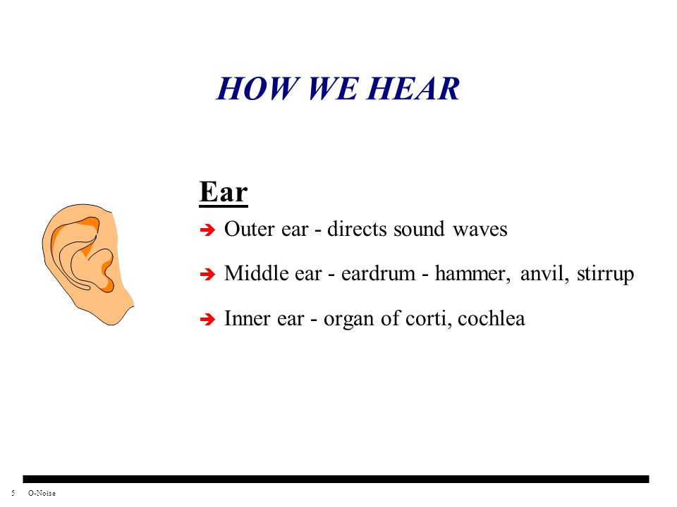 HOW WE HEAR Ear Outer ear - directs sound waves
