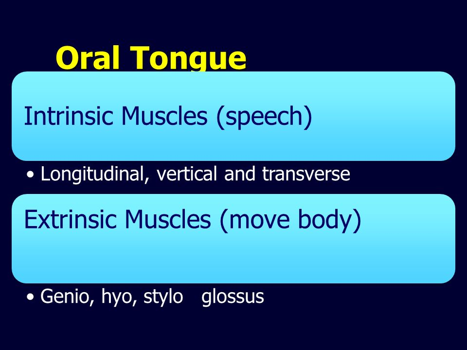 Oral Tongue Intrinsic Muscles (speech) Longitudinal, vertical and transverse. Extrinsic Muscles (move body)