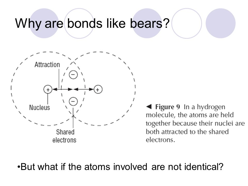Why are bonds like bears