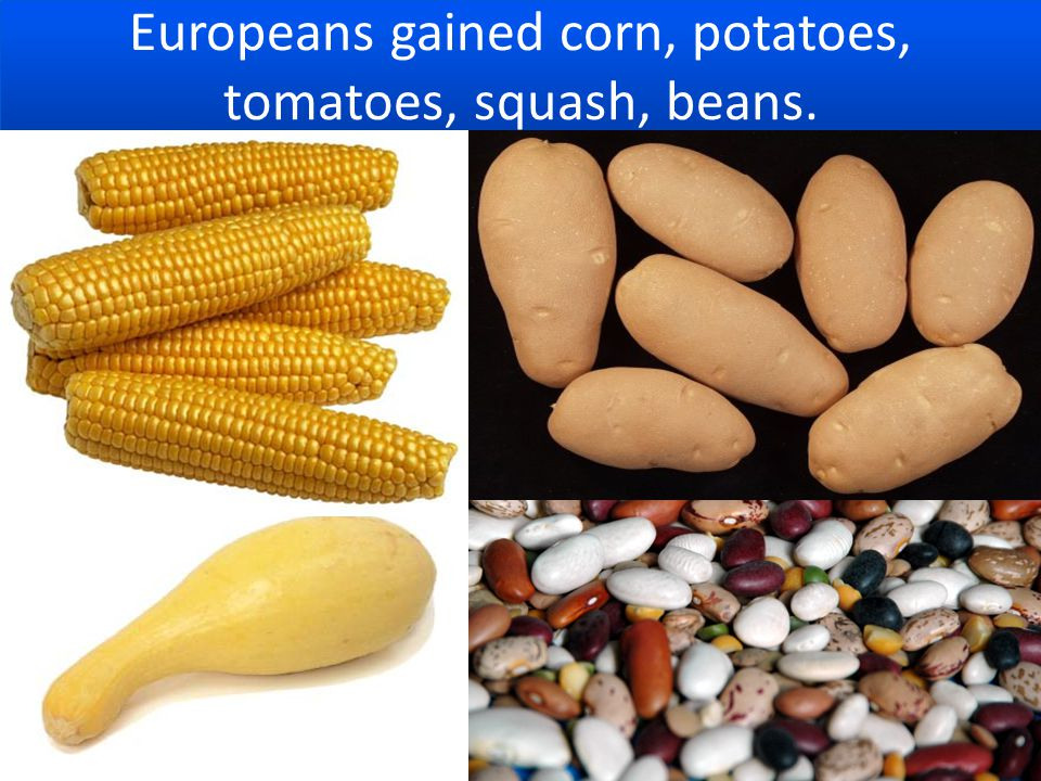 Europeans gained corn, potatoes, tomatoes, squash, beans.