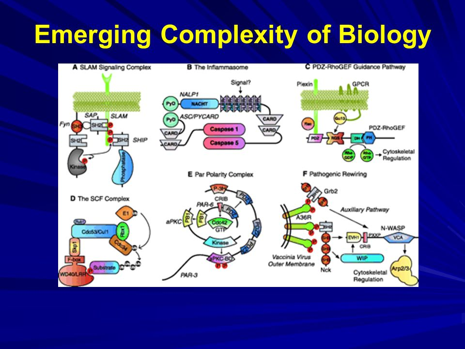 Emerging Complexity of Biology