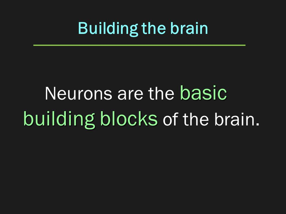 Neurons are the basic building blocks of the brain.