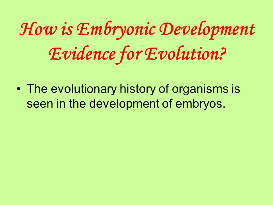 How is Embryonic Development Evidence for Evolution