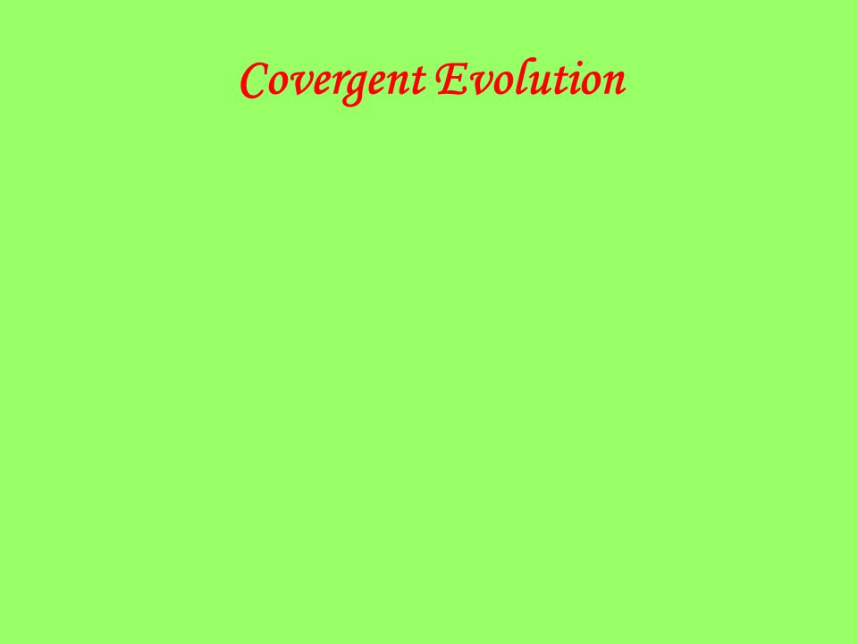 Covergent Evolution