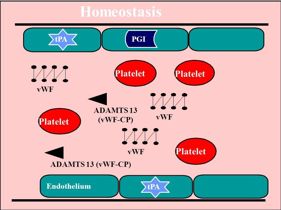 Homeostasis Platelet vWF ADAMTS 13 (vWF-CP) tPA PGI Endothelium