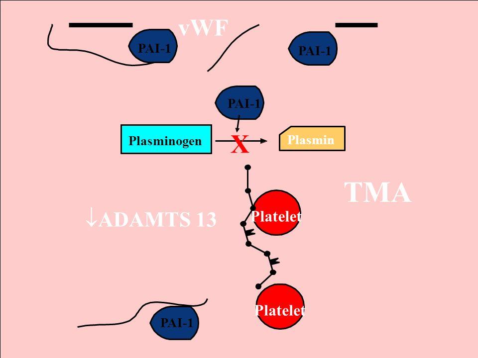 TMA X vWF ADAMTS 13 Platelet PAI-1 PAI-1 PAI-1 Plasminogen Plasmin