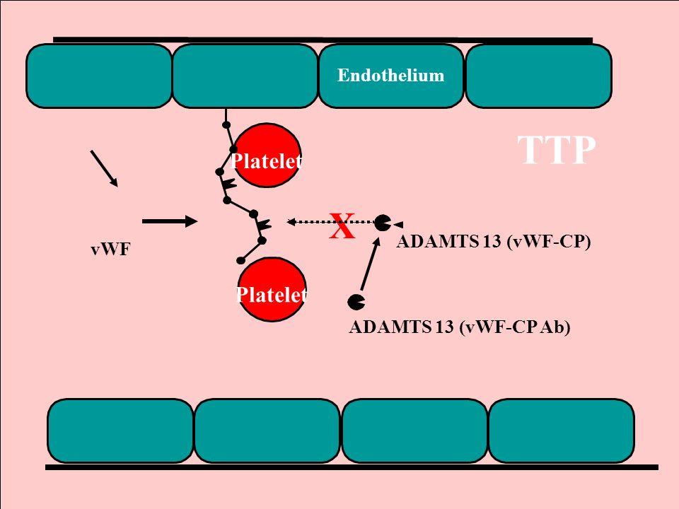 TTP X Platelet Platelet Endothelium ADAMTS 13 (vWF-CP) vWF