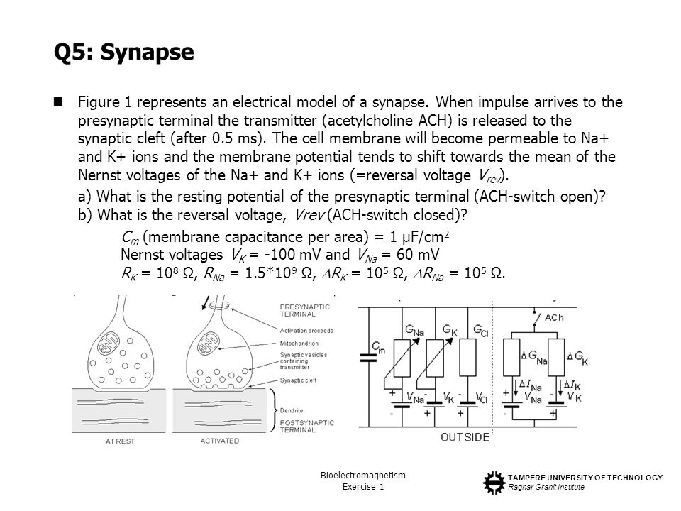 Q5: Synapse