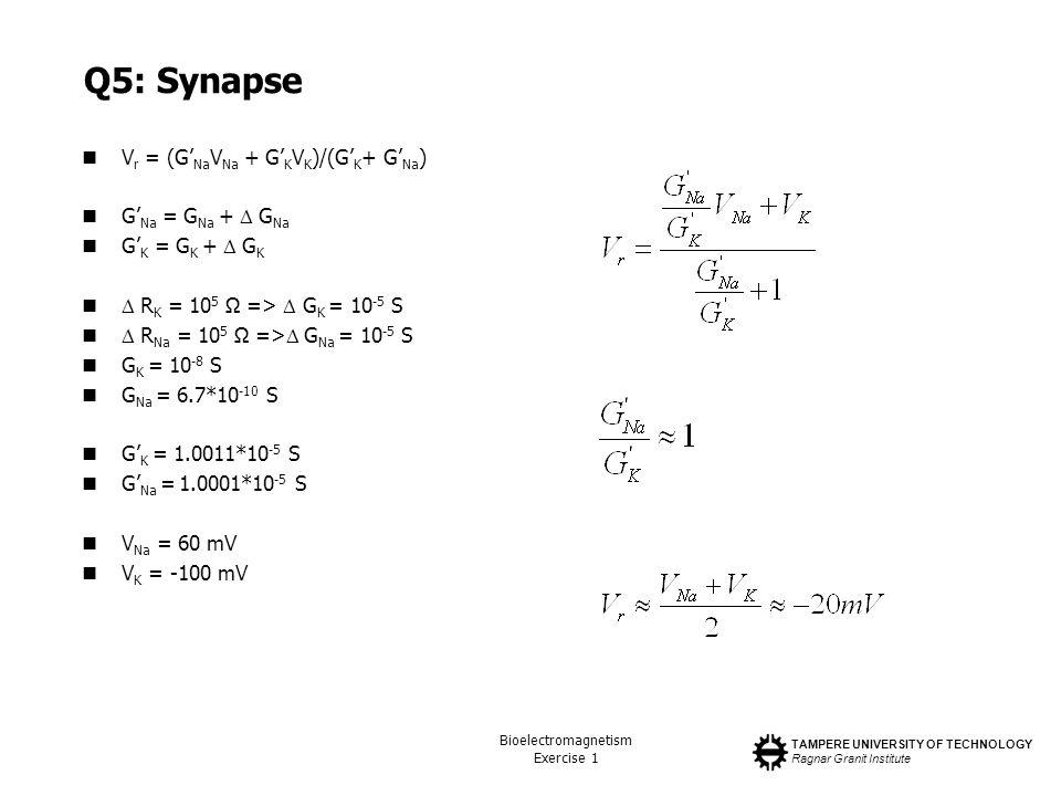 Q5: Synapse Vr = (G'NaVNa + G'KVK)/(G'K+ G'Na) G'Na = GNa +  GNa