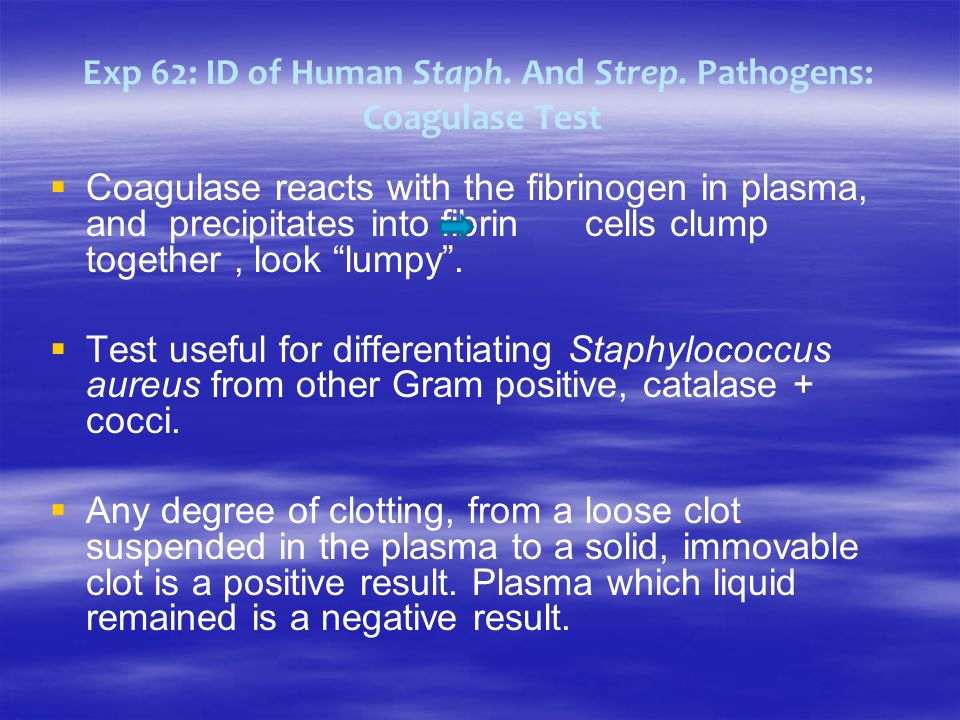 Exp 62: ID of Human Staph. And Strep. Pathogens: Coagulase Test