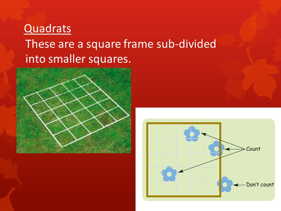 Quadrats These are a square frame sub-divided into smaller squares.