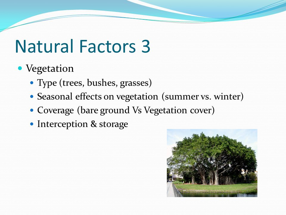 Natural Factors 3 Vegetation Type (trees, bushes, grasses)