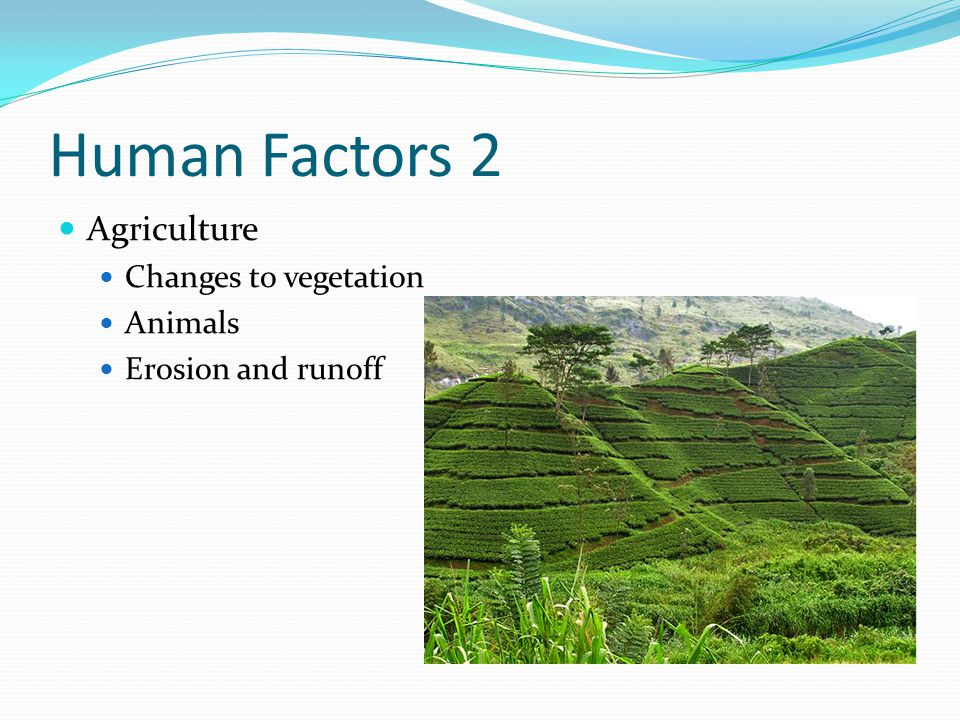 Human Factors 2 Agriculture Changes to vegetation Animals
