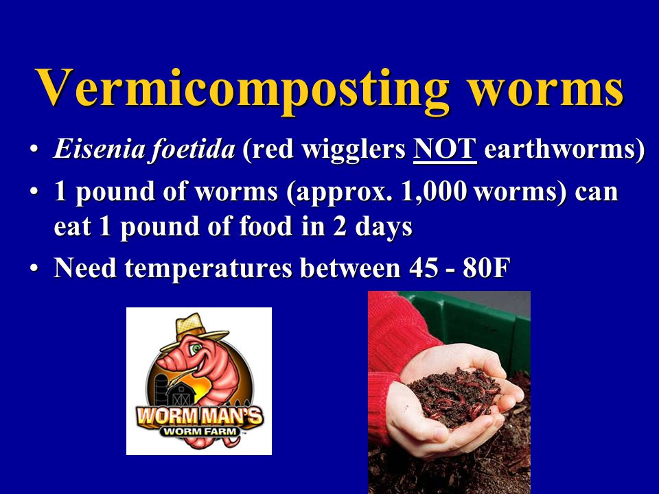 Vermicomposting worms