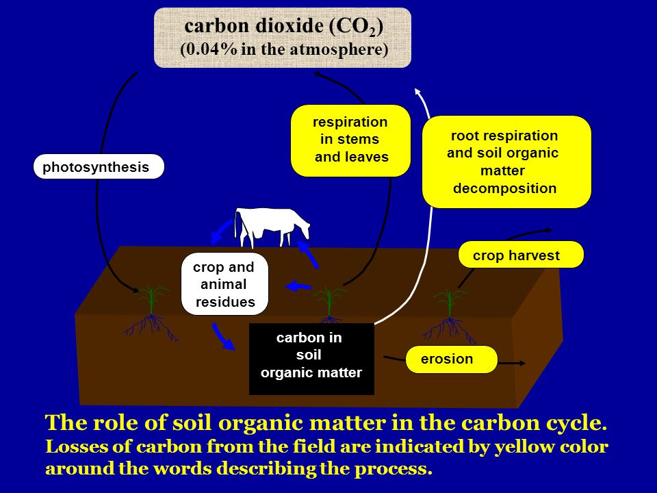 carbon dioxide (CO2) (0.04% in the atmosphere) respiration. in stems. and leaves. root respiration.