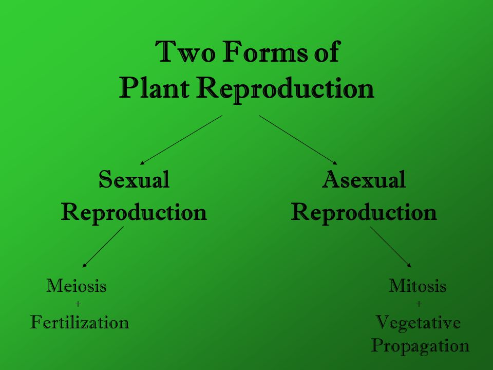 Two Forms of Plant Reproduction