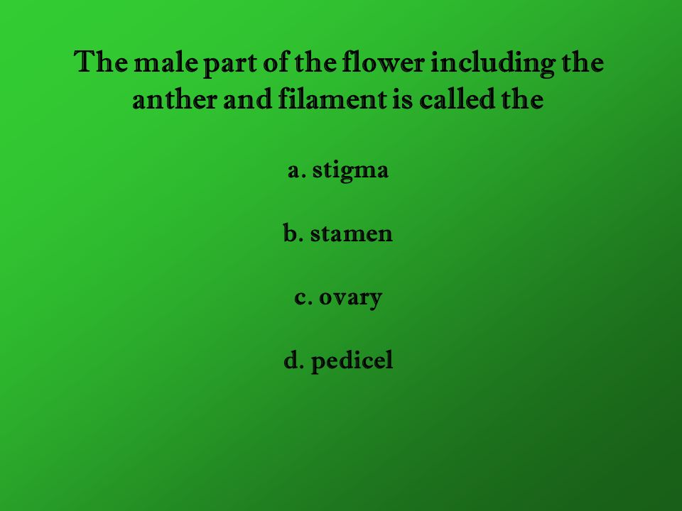 The male part of the flower including the anther and filament is called the