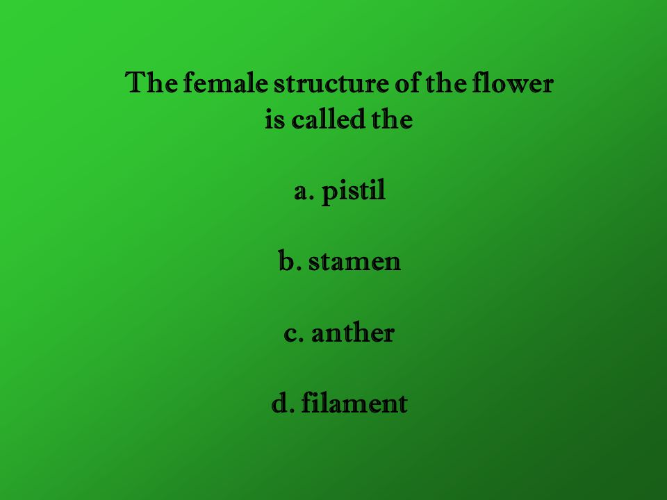 The female structure of the flower