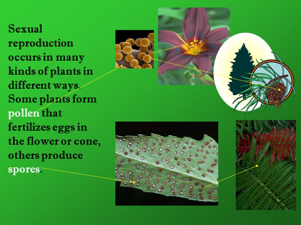 Sexual reproduction occurs in many kinds of plants in different ways