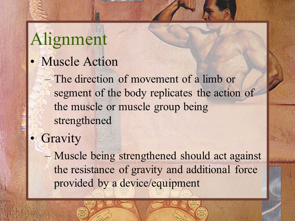 Alignment Muscle Action Gravity