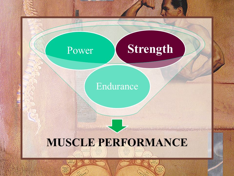 Strength Power Endurance MUSCLE PERFORMANCE