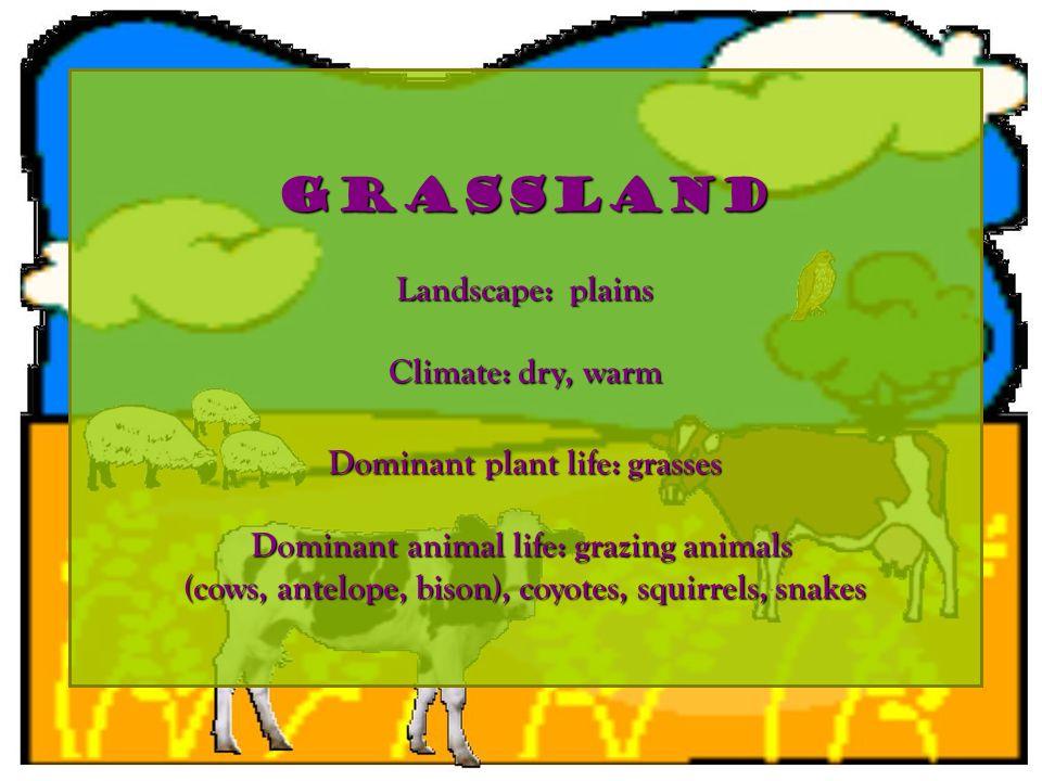 grassland Landscape: plains Climate: dry, warm