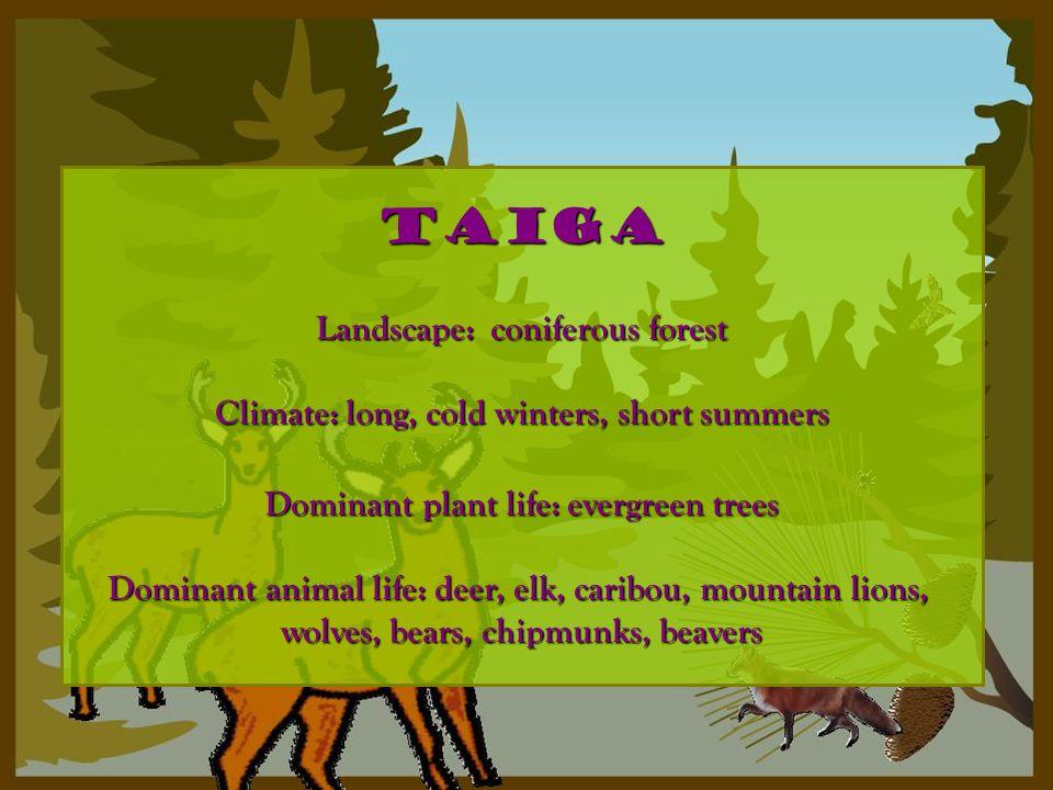 taiga Landscape: coniferous forest