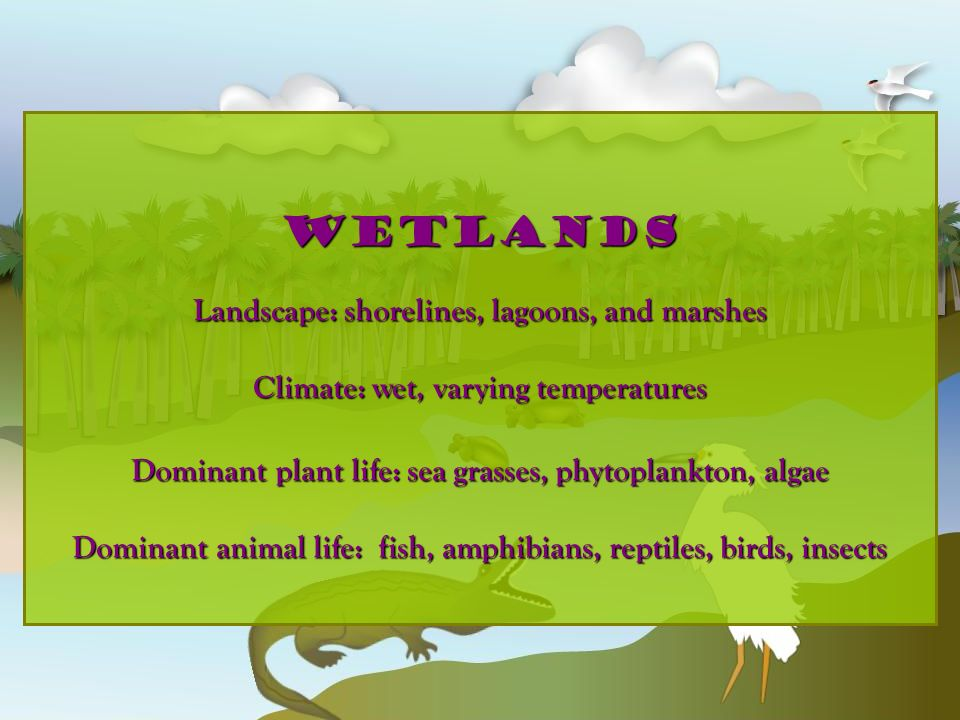 wetlands Landscape: shorelines, lagoons, and marshes