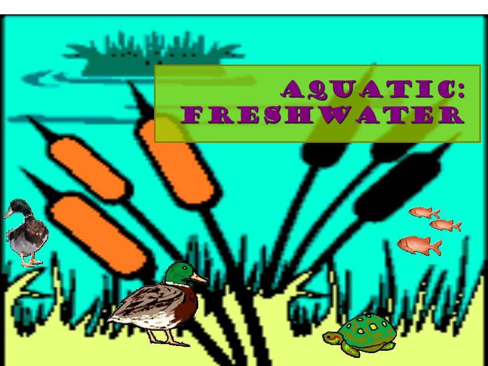Aquatic: freshwater