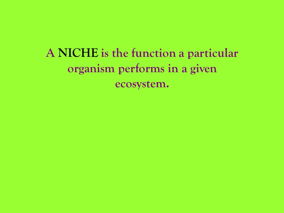 A NICHE is the function a particular organism performs in a given ecosystem.