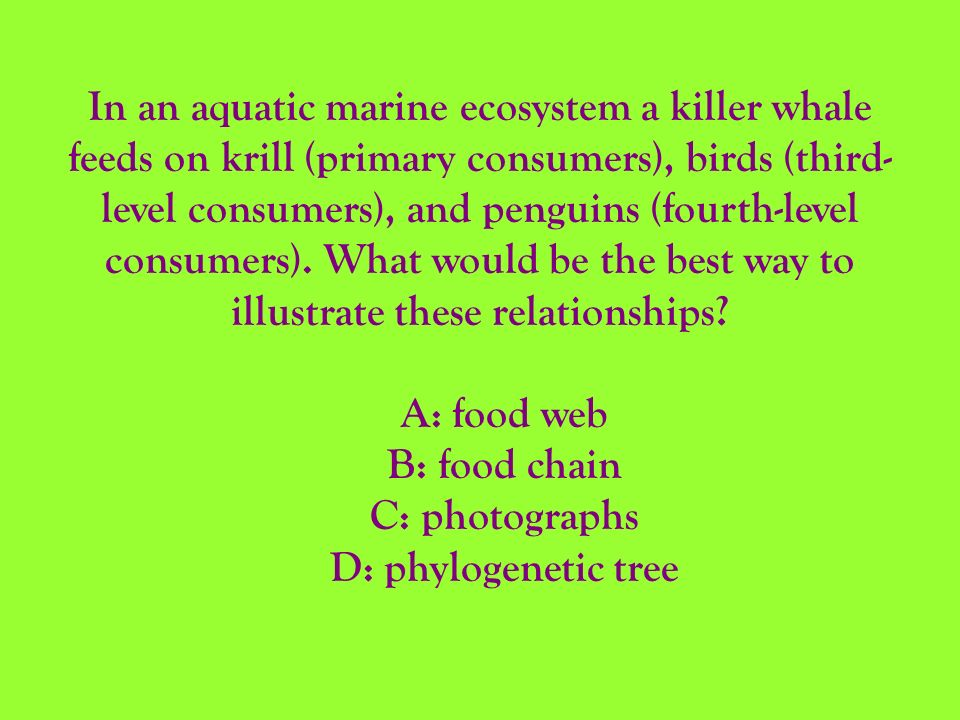 In an aquatic marine ecosystem a killer whale feeds on krill (primary consumers), birds (third-level consumers), and penguins (fourth-level consumers). What would be the best way to illustrate these relationships