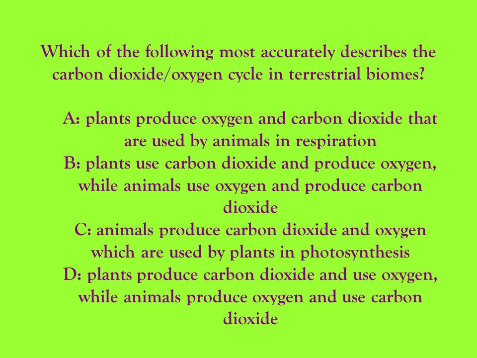 Which of the following most accurately describes the carbon dioxide/oxygen cycle in terrestrial biomes