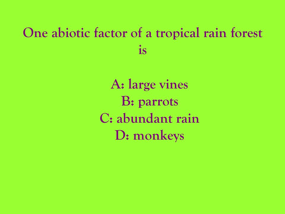 One abiotic factor of a tropical rain forest is