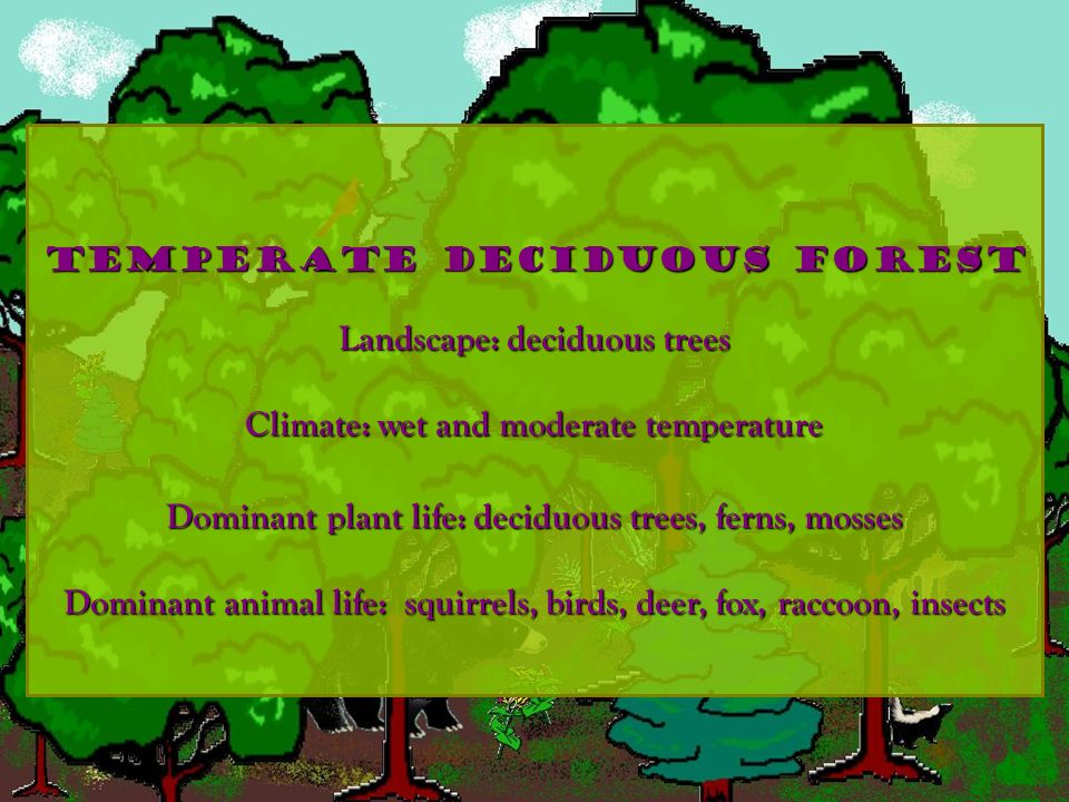 Landscape: deciduous trees Climate: wet and moderate temperature