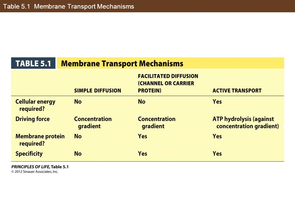 Table 5.1 Membrane Transport Mechanisms