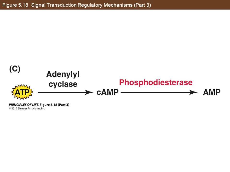 Figure 5.18 Signal Transduction Regulatory Mechanisms (Part 3)