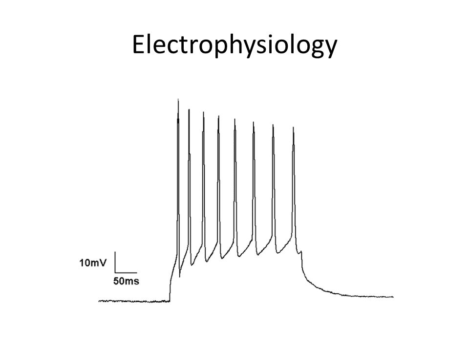 Electrophysiology This is CURRENT CLAMP – clamp current (inject current) – measure change in voltage of membrane as response.