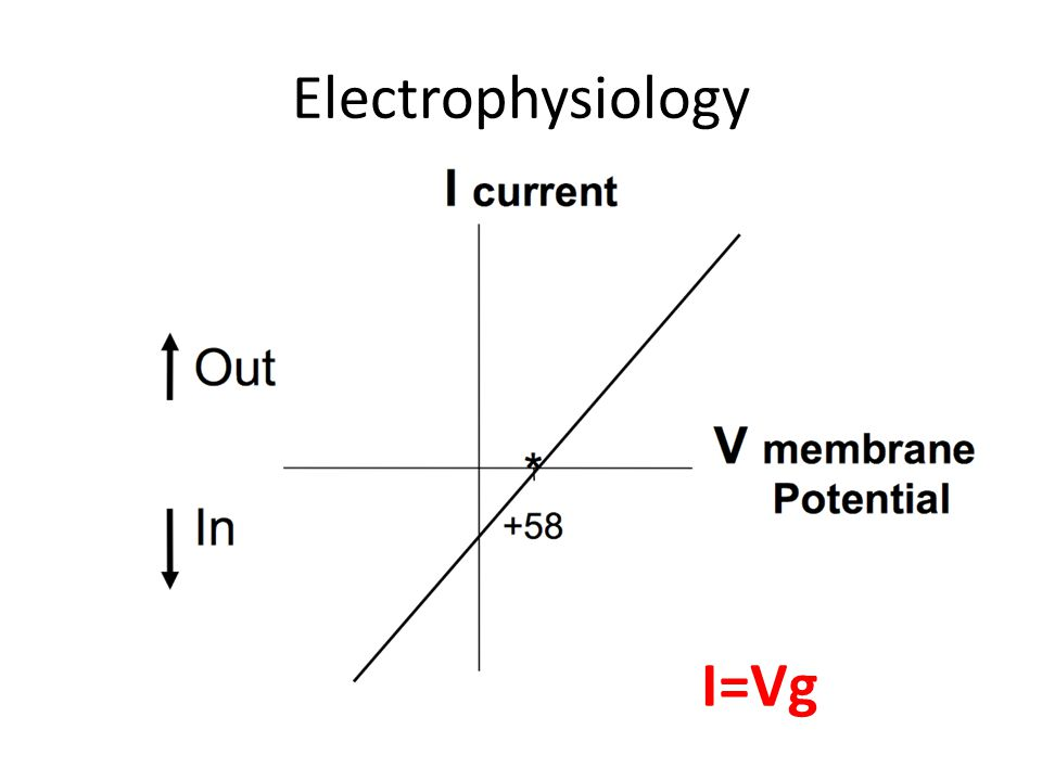 Electrophysiology I=Vg IV plots are extremely important to understand.