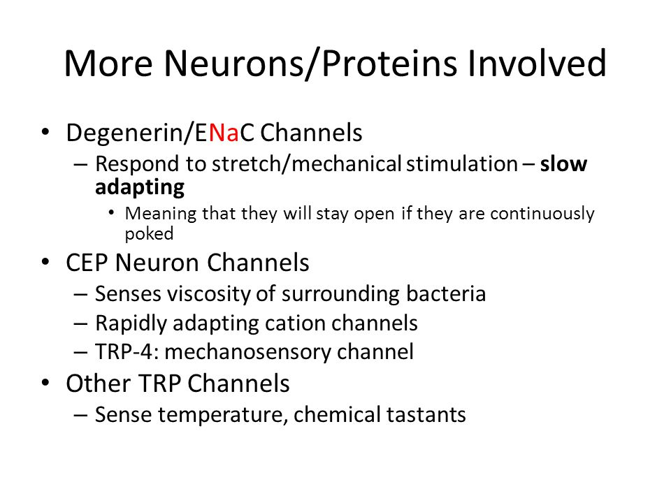 More Neurons/Proteins Involved