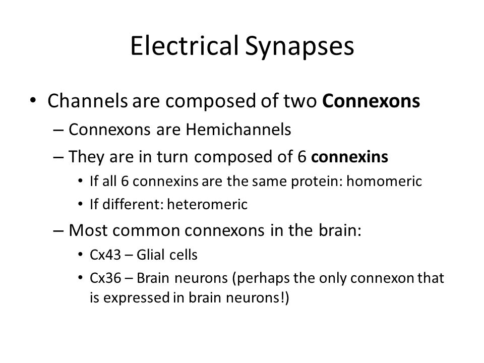 Electrical Synapses Channels are composed of two Connexons