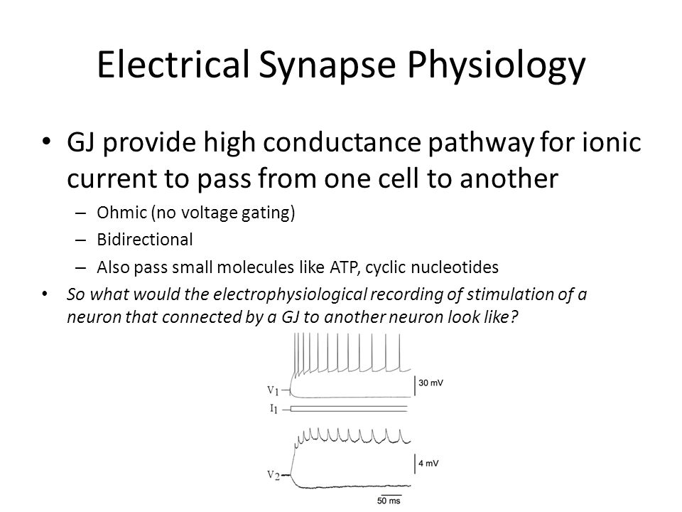 Electrical Synapse Physiology
