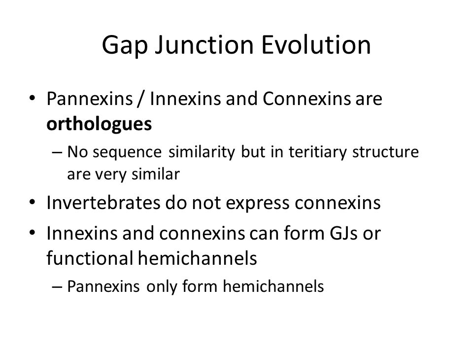 Gap Junction Evolution