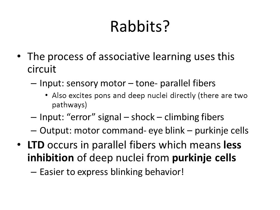 Rabbits The process of associative learning uses this circuit